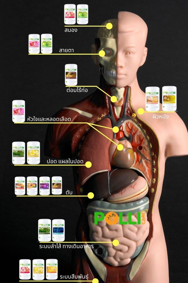 วิธีเลือกพอลลิติน ตามอวัยวะ