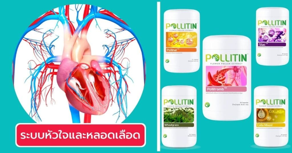 วิธีเลือกพอลลิติน ระบบหลอดเลือด